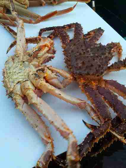 crab422 A Day in King Crab Vegas